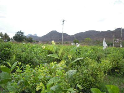 கவுத்தி வேடியப்பனை மலை