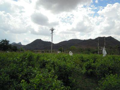கவுத்தி வேடியப்பன் மலை