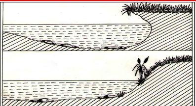 பலவீனப்படுத்தப்பட்ட ஆற்றங்கரை