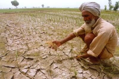 punjab-farmer