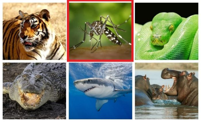 Most-Dangerous-Animals-in-the-world